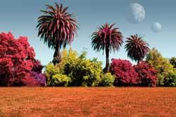 nongreen plants