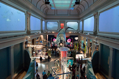 Ocean Hall at the Natural History Museum