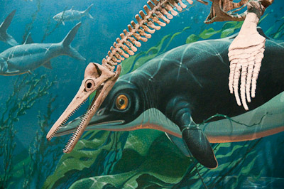 Mural and Skeleton, Natural History Museum