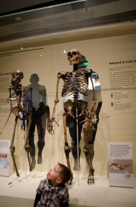 Hall of Human Origins at Natural History Museum