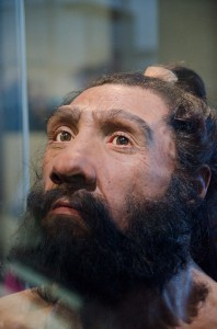 Homo neanderthalensis in Hall of Human Origins at Natural History Museum